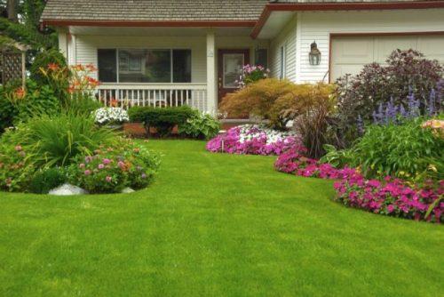 Artificial Grass & Plants